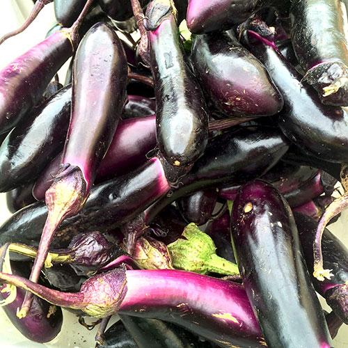 Japanese_eggplant