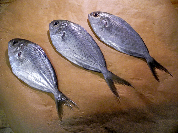 butterfish_clipped
