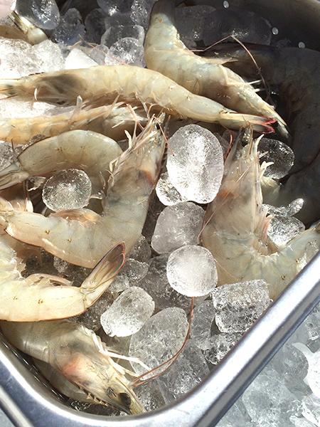 Hudson_valley_shrimp