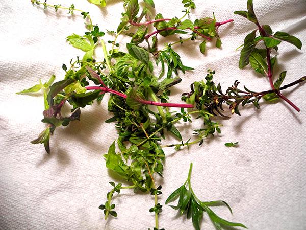 herbs_for_porgy