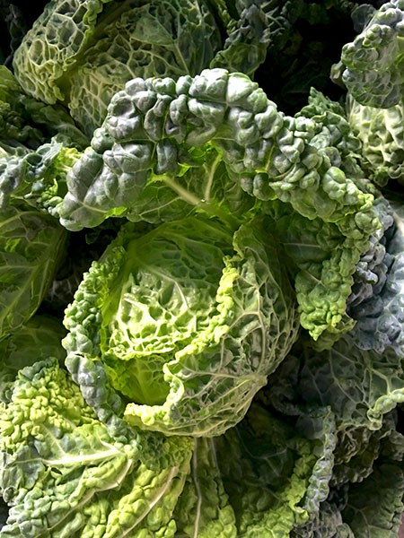 Savoy_cabbage