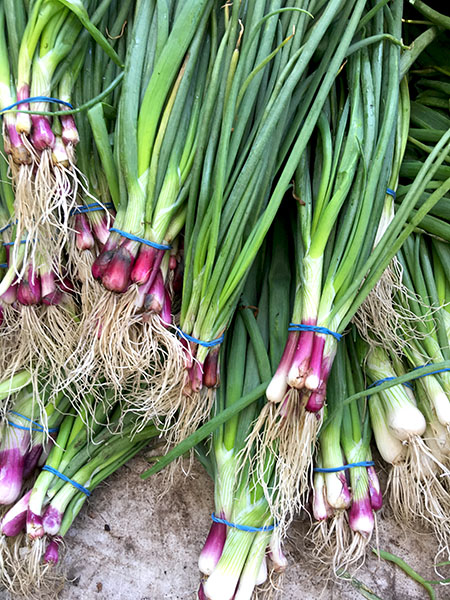 spring_onions