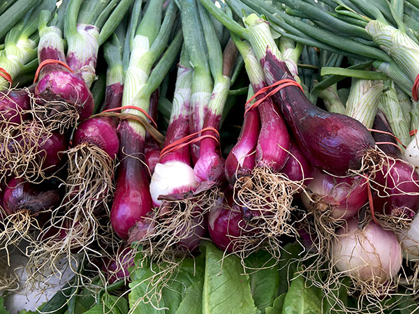 young_red_onions