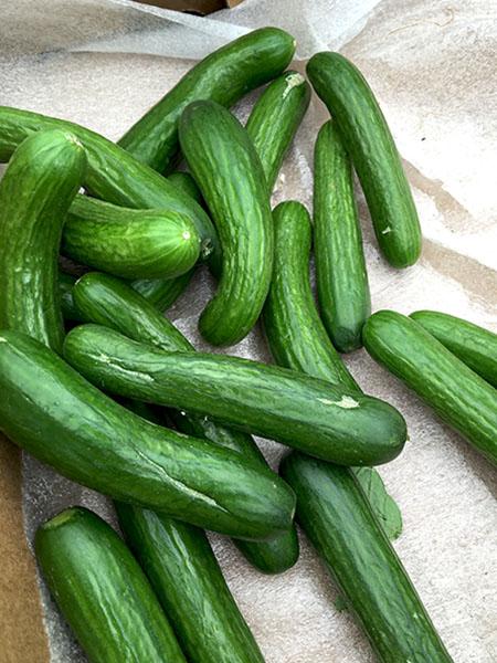 Persian_cucumbers