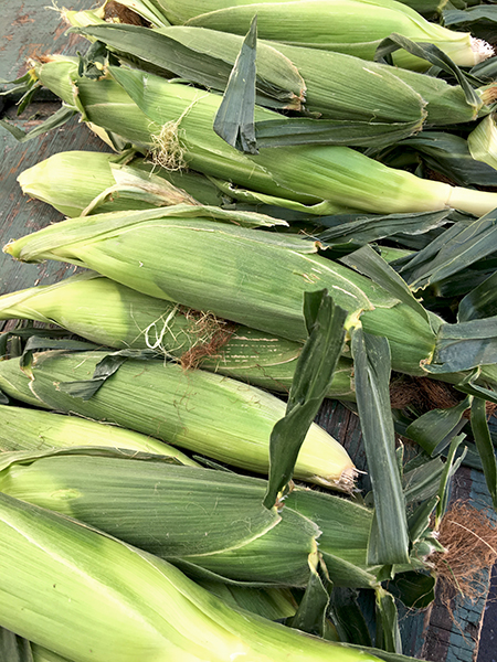 corn_ears