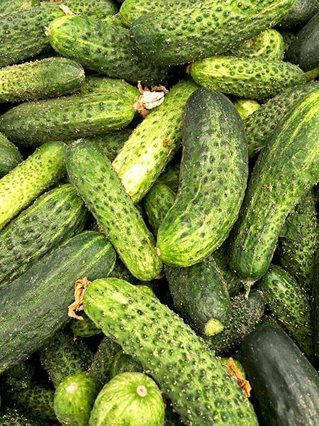 cucumbers_Asian3