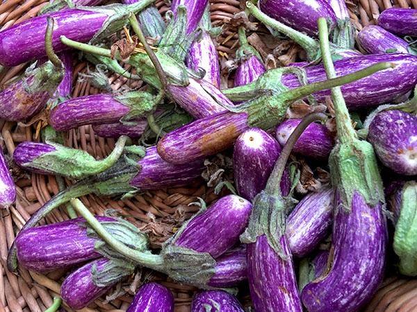 eggplant_fairy_2