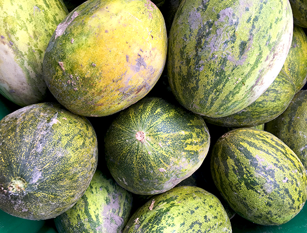 Lambkin_melons