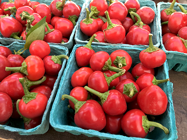 Calabrian_peppers