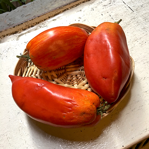 tomatoes_red_plum