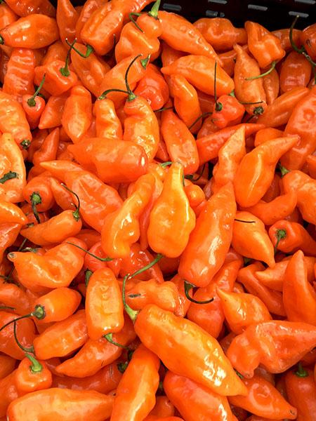 habanada_peppers