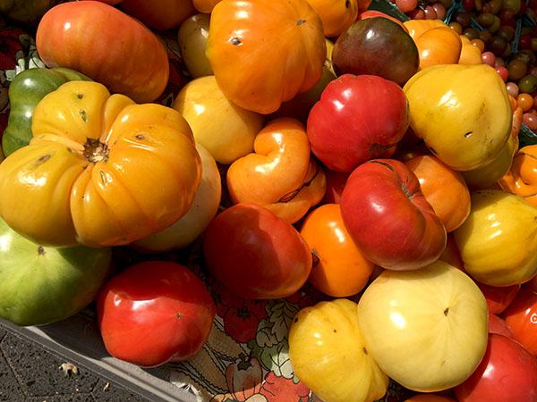 tomatoes_eckerton