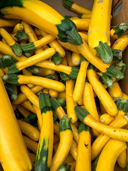 yellow_zucchini