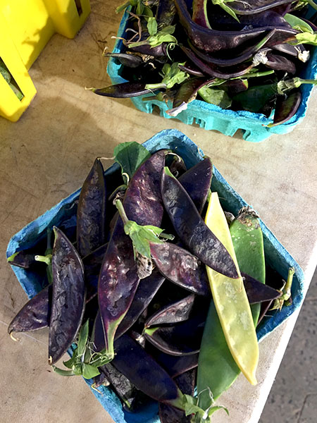 purple_snow_peas