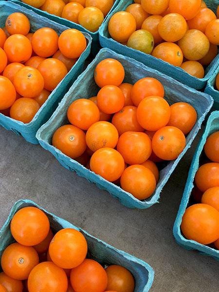 sun_gold_tomatoes