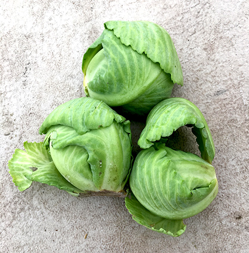 3_cabbages