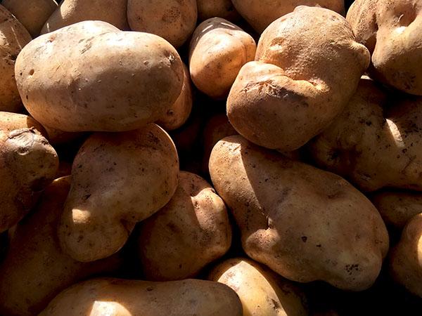 carola _potatoes