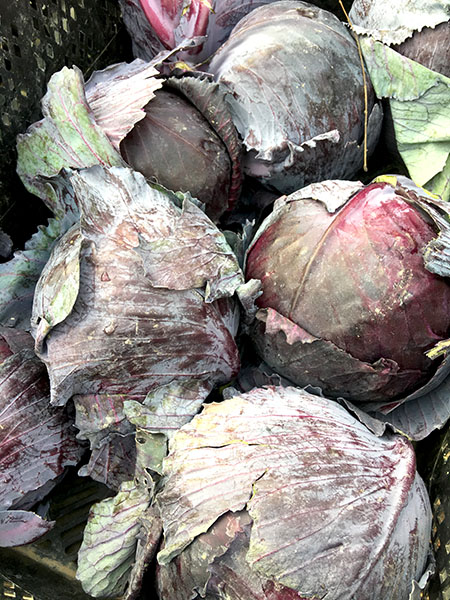 red_cabbage2