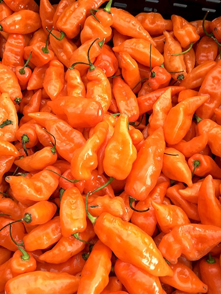 the habanada pepper: fresh, and dried two ways – Hoggard ...