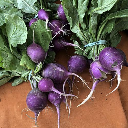 purple_radishes.jpg